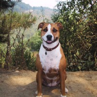 Dog portrait. The young Stella on her favorite trail in Oakland