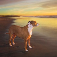 Dog Portrait of Stella at the beach during sunset