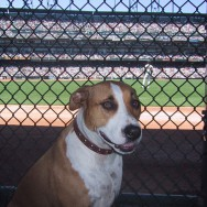 Dog Portrait of Stella at a Giants game